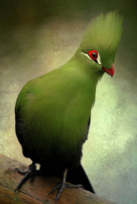 Parrot Art Mixed Media - Green Crested Parrot Art by Georgiana Romanovna