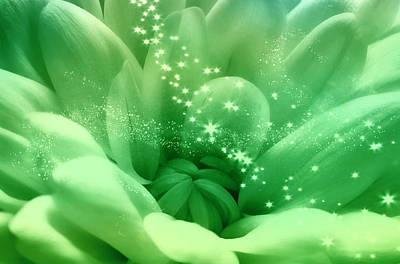 Photograph - Green Crysanthemum With Stars by Johanna Hurmerinta