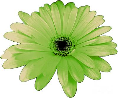 Photograph - Green Daisy Flower by Delynn Addams