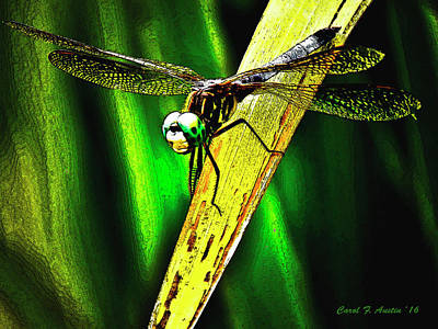Mixed Media - Green Darner Dragonfly Frontal Portrait Wall Art by Carol F Austin