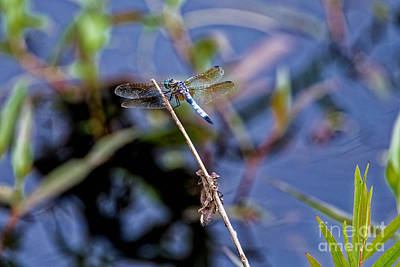 Photograph - Green Darner by Paul Mashburn