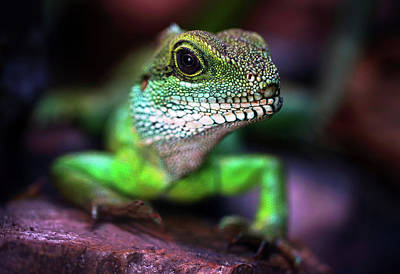 Photograph - Green Dragon by Jaroslaw Blaminsky