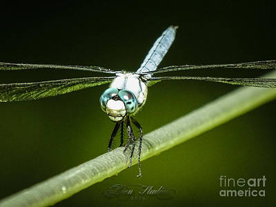 Photograph - Green Dragonfly by Melissa Messick