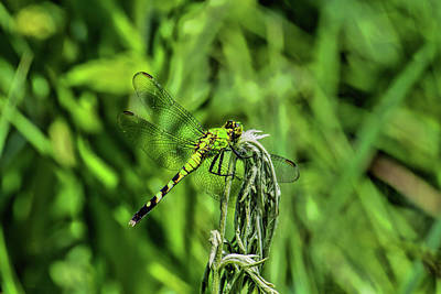 Photograph - Green Dragonfly On Green by Alana Thrower