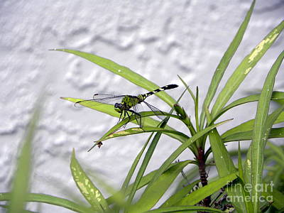 Photograph - Green Dragonfly by Terri Mills