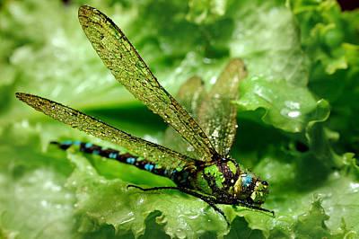 Green Dragonfly Original by Yuri Hope