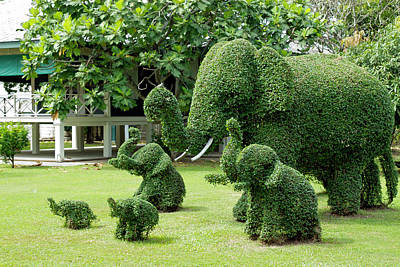 Photograph - Green Elephants by David Freuthal