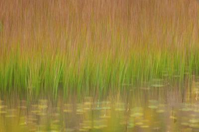 Photograph - Green  by Emmanuel Panagiotakis