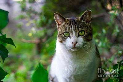 Tabby Cat Photograph - Green Eyes - Cat In The Wilderness by Thomas Jones
