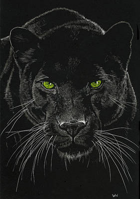 Drawing - Green Eyes by William Underwood