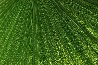 Photograph - Green Fan -  by Georgia Mizuleva