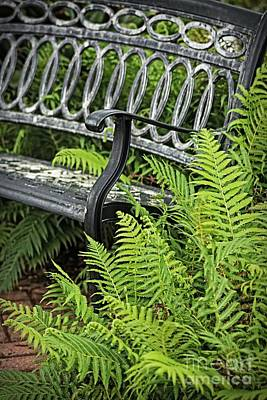 Photograph - Green Fern And Garden Bench by Ella Kaye Dickey