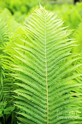 Green Ferns, Close Up View Art Print