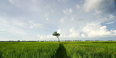 Photograph - Green Field by Arik S Mintorogo