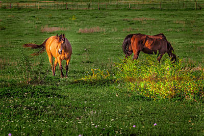 Photograph - Green Field In Spring by Melinda Ledsome