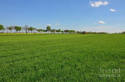 Crop Rotation Wall Art - Photograph - Green Field Of Wheat by Ewa Olek