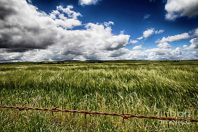 Photograph - Green Fields by Douglas Barnard