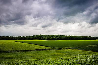Photograph - Green Fields by M G Whittingham