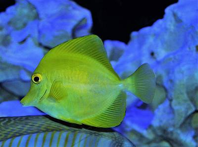 Photograph - Green Fish by Charles HALL