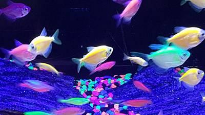 Photograph - Green Fish Yellow Fish 123 by Rob Hans