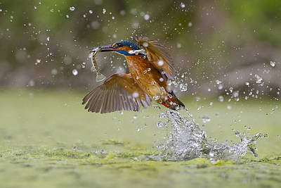 Water Splashing Photograph - Green Fishing by Marco Redaelli