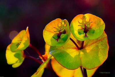 Photograph - Green Flowers Up Close by Mick Anderson