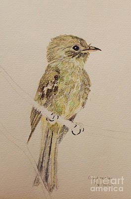 Flycatcher Drawing - Green Flycatcher by Linda Alford