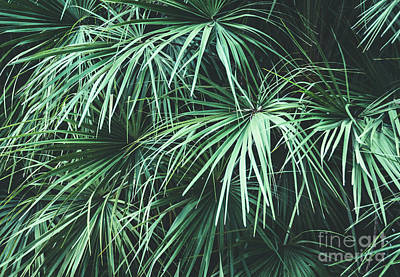 Photograph - Green Foliage 2 by Andrea Anderegg