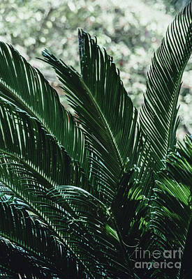 Photograph - Green Foliage 3  by Andrea Anderegg