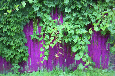 Photograph - Green Foliage Pink Fence Painterly by Mary Bedy