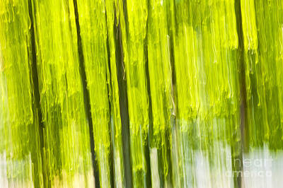 Motion Photograph - Green Forest Abstract by Elena Elisseeva