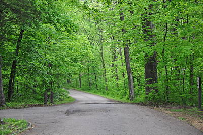 Lowden State Park Photograph - Green Forest by Daniel Ness