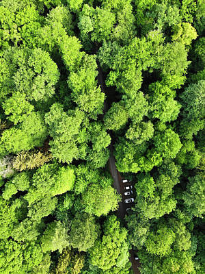 Photograph - Green Forest In Spring With Small Cars Aerial View by Matthias Hauser