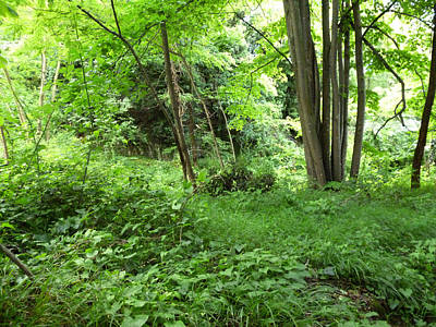 Photograph - Green Forest by Laura Greco