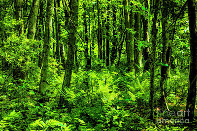 Photograph - Green Forest by Rick Bragan