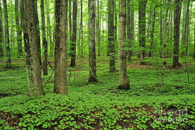 Beautiful Photograph - Green Forest by Terri Gostola