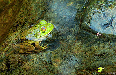 Photograph - Green Frog by Dee Browning