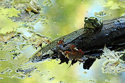 Photograph - Green Frog Sitting On A Log by Debbie Oppermann