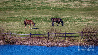Photograph - Green Gables Horses by Roger Monahan