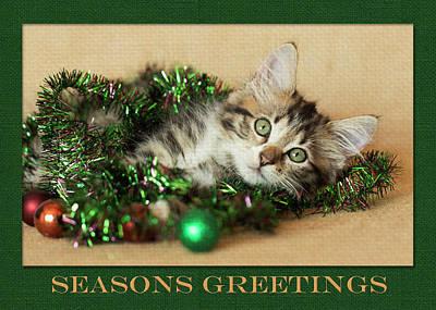 Photograph - Green Garland Kitty by Kelly Richardson