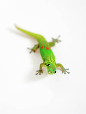 Photograph - Green Gecko by Denise Bird