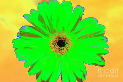 Photograph - Green Gerbera On Yellow Background by Irina Afonskaya