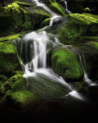 Photograph - Green Glow by Bill Wakeley