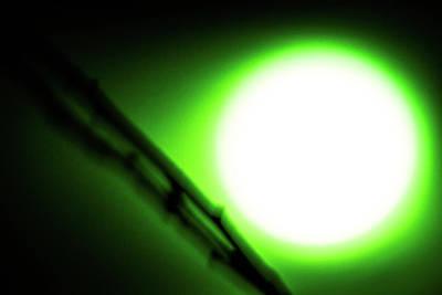 Photograph - Green Goblin by Tyson Kinnison