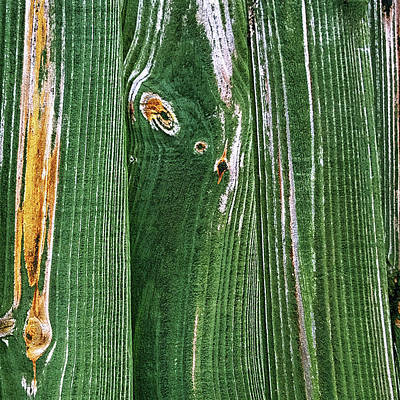 Photograph - Green Grain by Anne Kotan
