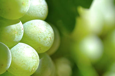 Wine Photograph - Green Grapes Close Up In Napa Valley Ready To Be Made Into Wine by Brandon Bourdages