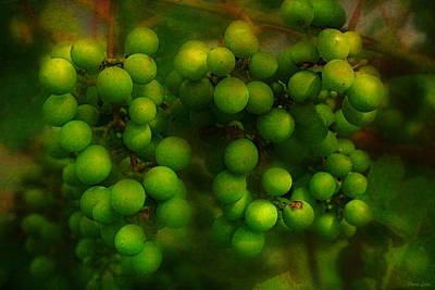Photograph - Green Grapes On Vine by Anna Louise