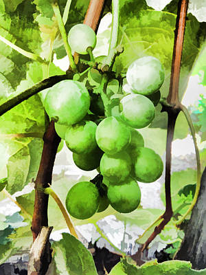 Mixed Media - Green Grapes by Pamela Walton