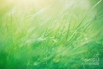Photograph - Green Grass Abstract Background by Anna Om