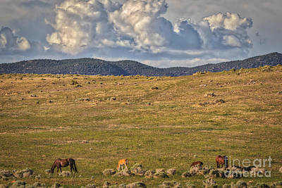 Open Range Photograph - Green Grass And High Tides Forever by Mitch Shindelbower